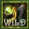 Acorn Pixie Wild