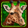 african-simba-giraffe