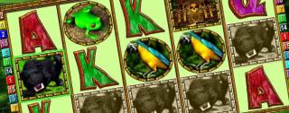 amazonia medium