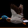 Duck Shooter Ente