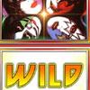 Kiss Wild