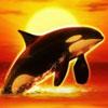 Orca Orca-Symbol