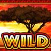 serengeti heat wild