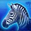 serengeti heat zebra