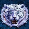 Tigers Claw Tiger